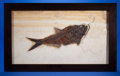 Fossils:Fish, FRAMED FOSSIL FISH. Diplomystus dentatus. Eocene.Green River Formation. Fossil Lake, Kemmerer,Wyoming. ...