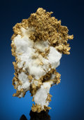 Minerals:Museum Specimens, NATIVE GOLD on MATRIX. Tightner Mine, Alleghany, ForestDistrict, Sierra Co., California, USA. ...