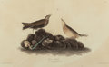 Fine Art - Work on Paper:Print, JOHN JAMES AUDUBON (American, 1785-1851). Brown Lark or American Pipit (Anthus rubescens). Plate X from The Birds of A...