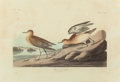 Fine Art - Work on Paper:Print, JOHN JAMES AUDUBON (American, 1785-1851). Buff Breasted Sandpiper (Tryngites subruficollis), 1835. Plate CCLXV from Th...