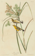 Fine Art - Work on Paper:Print, JOHN JAMES AUDUBON (American, 1785-1851). Prarie Warbler (Dendrioca discolor). Plate XIV from The Birds of America. ...