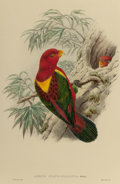 Fine Art - Work on Paper:Print, WILLIAM HART (American, 1823-1894). Yellow-mantled Lory (Loriusflavo-palliatus) from A Monograph of the Trochilidae,...