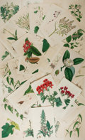 Books:Prints & Leaves, [Flowers]. Group of Approximately 45 Engraved Prints withHand-Coloring. Ca. 19th century. Measure 9 x 5.5 inches. Verygood...