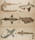 Books:Prints & Leaves, [Japanese Marine Life]. Group of Six Color Prints Taken fromSiebold's and de Haan's Fauna Japonica, sive Descriptioani...