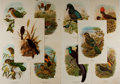 Art:Illustration Art - Mainstream, [Bird Illustration]. Group of Ten Avian Chromolithographs. Richcolor. Light stains to some. Lightly toned. 8.5 x 12.5 inche...