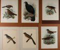 Art:Illustration Art - Mainstream, [Birds]. Group of Six Avian Chromolithographs. Largest measures11.75 x 15.5 inches (including mat). Two smaller prints are ...