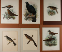 [Birds]. Group of Six Avian Chromolithographs. Largest measures 11.75 x 15.5 inches (including mat). Two smaller prin