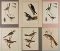 Art:Illustration Art - Mainstream, [Lithographs]. Group of Six Avian Lithographs, ca. 1870. Artistunknown. Prints measure 11.25 x 8.5 loosely. Taken from the ...