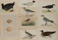 Art:Illustration Art - Mainstream, [Illustration]. Group of Nine Avian Prints. Some hand tinted.Several originally bound in books, binding marks along one edg...