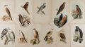 Art:Illustration Art - Mainstream, [Illustration]. Group of Thirteen Avian Prints. Ca. 1860. Largestmeasures 10 x 6.75 inches. Some toning. Small tears and cr...