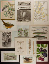 [Prints]. Large Group of More than 75 Prints. Mostly 19th and 20th century. Includes botanical, ornithology, fish, an