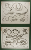 Art:Illustration Art - Mainstream, [Engravings]. Group of Two Steel Engraved Animal Prints. Artistunknown. N.d. 26.5 X 21 inches loosely. Prints tipped in and...