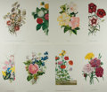 Art:Illustration Art - Mainstream, [Botanicals]. James Andrews. Group of Eight BotanicalChromolithographs. N.d. Modern. Measures 15.75 x 11.25 inches.Light c...