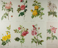 Art:Illustration Art - Mainstream, [Botanicals]. P. J. Redouté. Group of Eight Rose Chromolithographs.N.d. Modern. Average measures 12 x 16 inches, loosely. B...