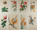 Art:Illustration Art - Mainstream, [Botanicals]. Georg Dionysius Ehret. Group of Eight BotanicalChromolithographic Prints. N.d. Modern. Prints measure 17 x 12...