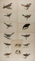 Art:Illustration Art - Mainstream, [Birds]. Group of 13 Hand Tinted Avian Prints. Artist unknown. N.d. 6.75 x 10 inches, loosely. Minor, scattered foxing to so...