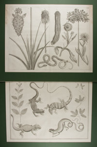 [Engraving]. Group of Two Botanical Engravings. N.d. Measures 22.75 x 28 inches, including mat. Light toning. Some cr