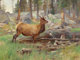 CARL CLEMENS MORITZ RUNGIUS (American, 1869-1959) Elk, 1906 Oil on canvas 18 x 24 inches (45.7 x 61.0 cm) Signed low