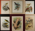 Art:Illustration Art - Mainstream, [Chromolithographs]. Group of Six Avian Prints. N.d. Largestmeasures 13.25 x 16 inches, including mat. Light toning. Minor ...