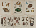 Art:Illustration Art - Mainstream, [Illustration]. Group of Eight Conchological Chromolithographs.Various publishers. The larger measures 6.25 X 5 inches, loo...