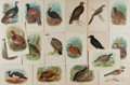 Art:Illustration Art - Mainstream, [Illustration]. Group of Eighteen Avian Chromolithographs. Wyman& Sons. N.d. Measures 7 x 4.75 inches, loosely. Bright colo...
