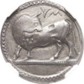 Ancients:Greek, Ancients: LUCANIA. Sybaris. Ca. 550-510 BC. AR stater (25mm, 7.58 gm, 12h)....