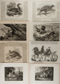 Art:Illustration Art - Mainstream, [Illustration]. Group of Eleven Avian Prints. Ca., 1870. Previouslybound. Some from The London Illustrated News. Light ...
