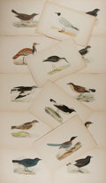 Art:Illustration Art - Mainstream, [Illustration]. Charles Bree. Group of Fourteen AvianIllustrations. Ca., 1866. From Birds by Bree. Measures 10 x7 inch...