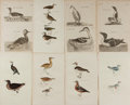Art:Illustration Art - Mainstream, [Illustration]. Group of Eight Avian Prints. N.d. 4.5 x 7.5 inches, loosely. Previously bound. Minor to moderate toning. Som...