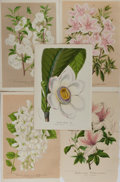 Art:Illustration Art - Mainstream, [Illustration]. Group of Five Botanical Prints. N.d. Measures 9.5 x6.5 inches, loosely. Previously bound. Strong color. Min...