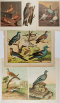 Art:Illustration Art - Mainstream, [Illustration]. Group of Six Avian Chromolithographs. N. d Mostmeasure 10.75 x 8 inches. Previously bound in Cassel...
