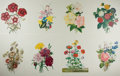 Art:Illustration Art - Mainstream, [Lithographs]. Group of Eight Botanical Chromolithographs. N.d. Measures 15.75 X 11.75 inches. Minor creasing and wear to ed...