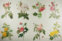 [Lithographs]. Group of Eight Botanical Chromolithographs. N.d. Measures 15.75 X 11.75 inches. Minor creasing and wea