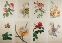 [Illustration]. Group of Eight Botanical Prints. N.d. Measures 12.25 x 17 inches, loosely. Bright color. Some minor m