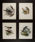Books:Prints & Leaves, [Ornithology] Lot of Four Colored Lithographs of Birds After Works by John Gerrard Keulemans (1842-1912). Matted to an overa...