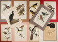 """Books:Prints & Leaves, [Ornithology] Lot of Ten Vintage Colored Lithograph Illustrationsof Birds. Various sizes from 8"""" x 11.25"""" (un-matted) to 13..."""