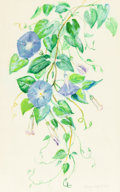 Works on Paper, MARY MOTZ WILLS (American, 1875-1965). Morning Glories. Watercolor on paper. 21-1/2 x 13-1/2 inches (54.6 x 34.3 cm) (si...