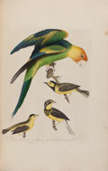 Books:Natural History Books & Prints, [Alexander Wilson. American Ornithology; or, the Natural History of the Birds of the United States. Plates. Engr...