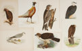 "Books:Natural History Books & Prints, [Natural History] Lot of Seven Vintage Color Bird Illustrations. Various sizes from 5.5"" x 9"" to 8.5"" x 11.25"", in portrait ..."