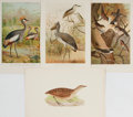 "Books:Natural History Books & Prints, [Natural History] Lot of Four Vintage Bird Illustrations. 7"" x 10.25"" in both portrait and landscape formats. Removed from a..."