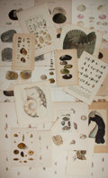 """Books:Natural History Books & Prints, [Natural History] Large Lot of 27 Antique Color Illustrations of Various Mollusks. Various sizes from 3.25"""" x 5.25"""" to 9"""" x ..."""