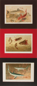 Books:Natural History Books & Prints, [Natural History Illustrations] Group of Three Hand-Colored Illustrations of Various Fish. Matted to an overall size of 11.5...