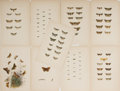 """Books:Natural History Books & Prints, [Natural History] Group of Nine Vintage Color Illustrations of Butterflies. 6.5"""" x 10.25"""". Removed from a larger volume. Ton..."""