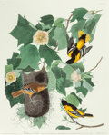Fine Art - Work on Paper:Print, JOHN JAMES AUDUBON (American, 1785-1851). Baltimore Oriole(Icterus galbula). Plate XII from The Birds of America.H...