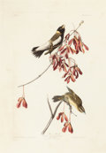 Fine Art - Work on Paper:Print, JOHN JAMES AUDUBON (American, 1785-1851). Rice Bird or Bobolink (Dolichonyx oryzivorus). Plate LIV from The Birds of A...