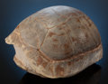 Fossils:Amphibians & Reptiles, COLORFUL FOSSIL TURTLE. Stylemys nebrascensis. LowerOligocene. White River Badlands. ...