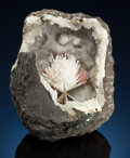 Minerals:Cabinet Specimens, SCOLECITE with EPISTILBITE . Jalgaon District, Maharashtra,India. ...
