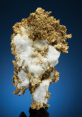 Minerals:Golds, NATIVE GOLD on MATRIX. Tightner Mine, Alleghany, Forest District, Sierra Co., California, USA. ...