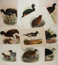 "Books:Prints & Leaves, [Ornithology] Lot of Ten Antique Colored Lithographs of Birds.Various sizes from 11"" x 8"" to 12.25"" x 9.5"" in portrait and ..."
