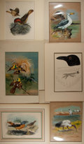 Books:Natural History Books & Prints, [Natural History Illustrations] Group of Six Fantastic Hand-Colored Lithographs of Various Birds. Matted to various sizes fr...